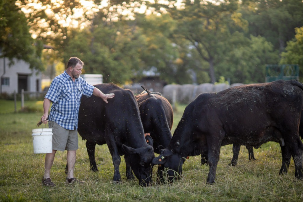 Same-day hip replacement patient, David Harbottle in the paddock with his cows